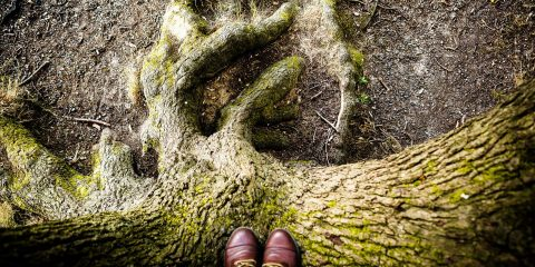 tree-shoes