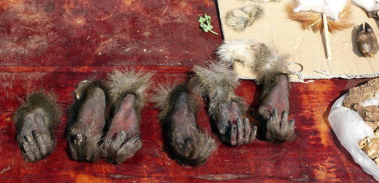 Monkey paws, still soft.