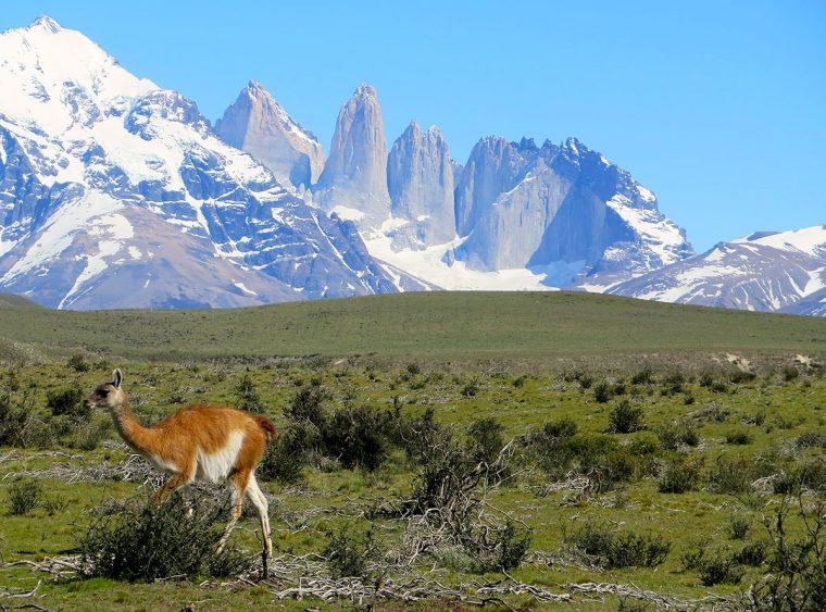 Los Torres del Paine and llama.