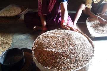 A Life of Science: Identity and Environmental Politics in Rainfed India, by Carly Nichols