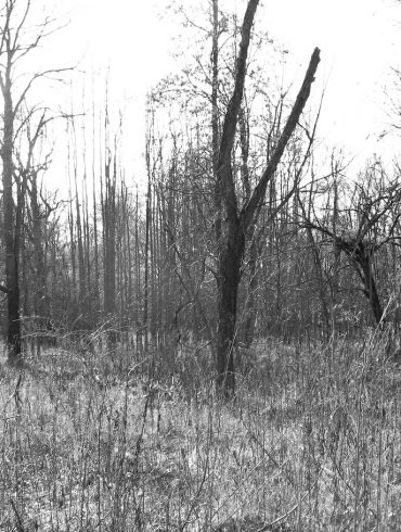 Ghost Trees, nonfiction by Jennie Goode