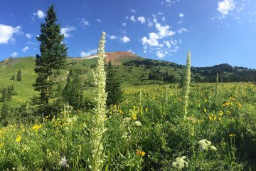 A Life of Science: Extreme Gardening in the Rocky Mountains, by Lorah Patterson
