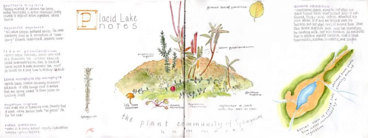 Illustration of plant community of Sphagnum