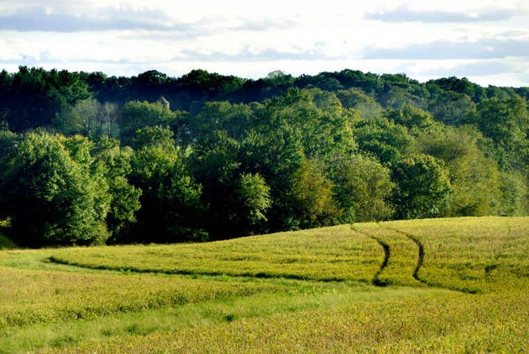 Shepherd's Hey Farm field.