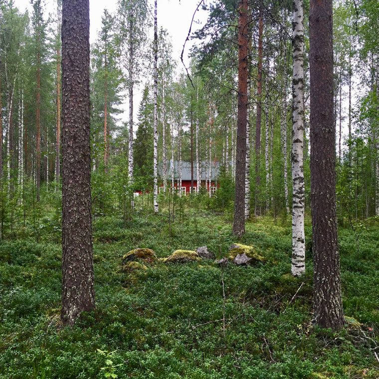 The woods and cabin