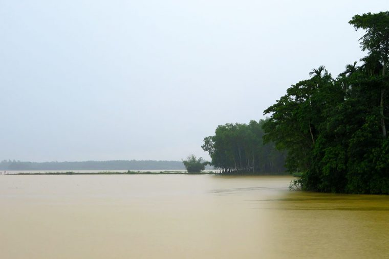 Paddy fields submerged