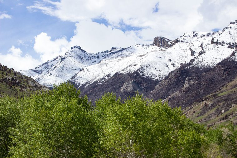 In the Ruby Mountains