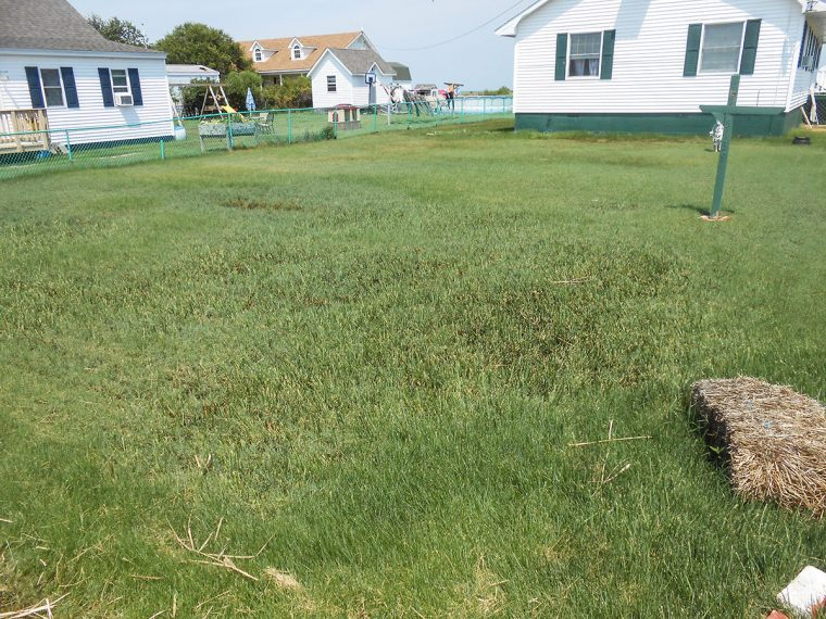 Yard and homes on Tangier Island. Photo by Rick Van Noy.