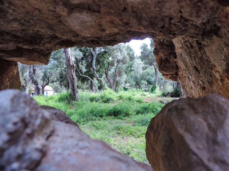 Olive grove as viewed between rocks