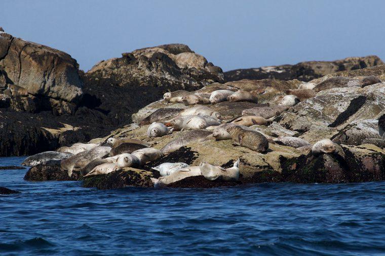 Seals on a rocky island.