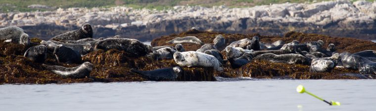Seals on shore.