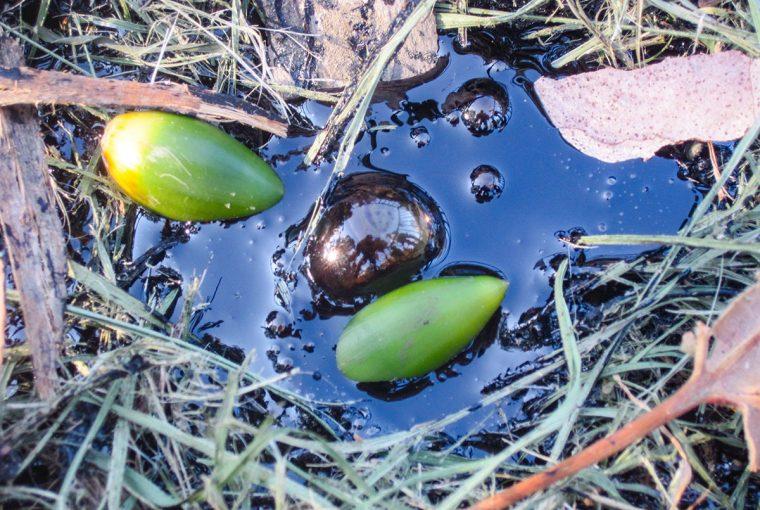 Tiny tar bubble