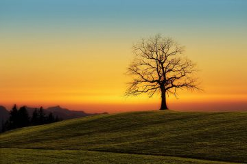 Silhouette of leafless tree on hill