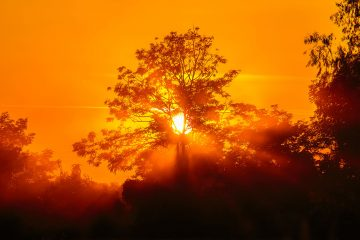 Orange smoky sunset with trees