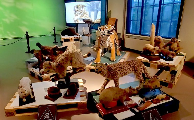 Taxidermied animals all pushed together.