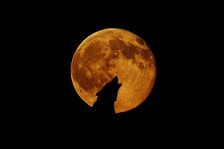 The Moon Howls Back